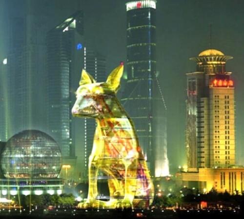 Aurele-lost-dog-Shanghai.jpg