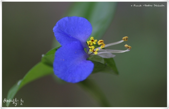 Fleurs d'un jardin des Landes en Septembre