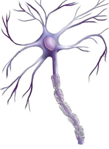 neurone-2