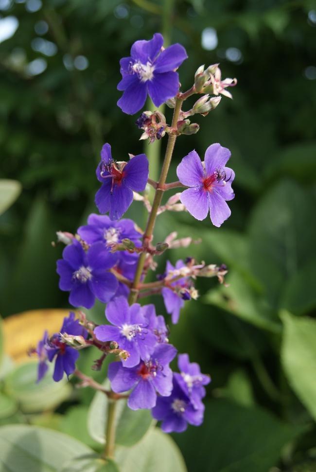 Promenade fleurie de Mimizan fin août