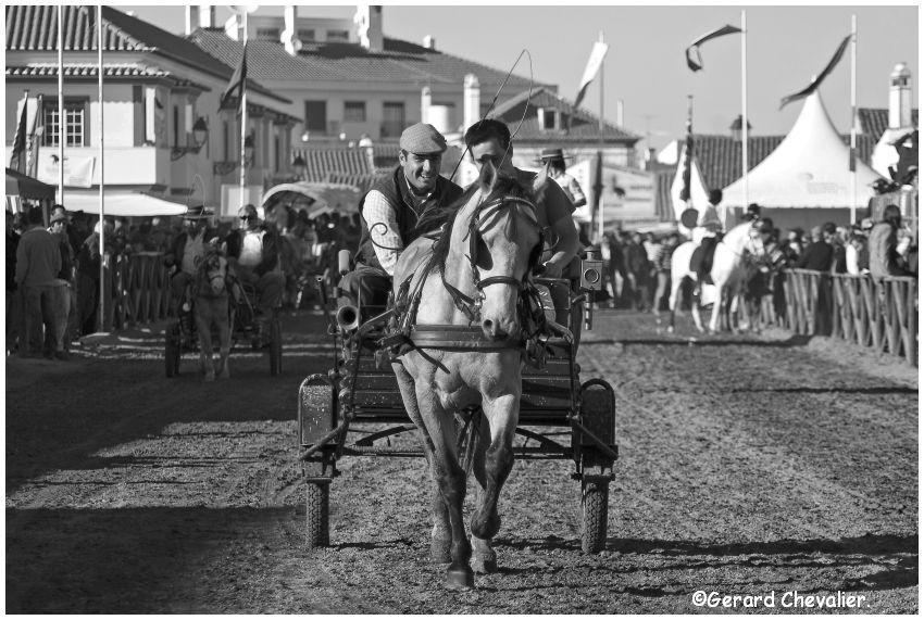 Feira nacional do cavalo - Golegã - Portugal #5