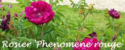Belgique Juin 2010 R. 'Phenomene rouge' 1