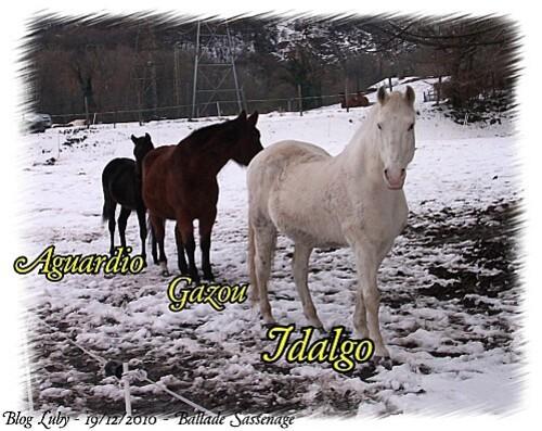 2010 19 12 ballade sassenage chevaux (4)