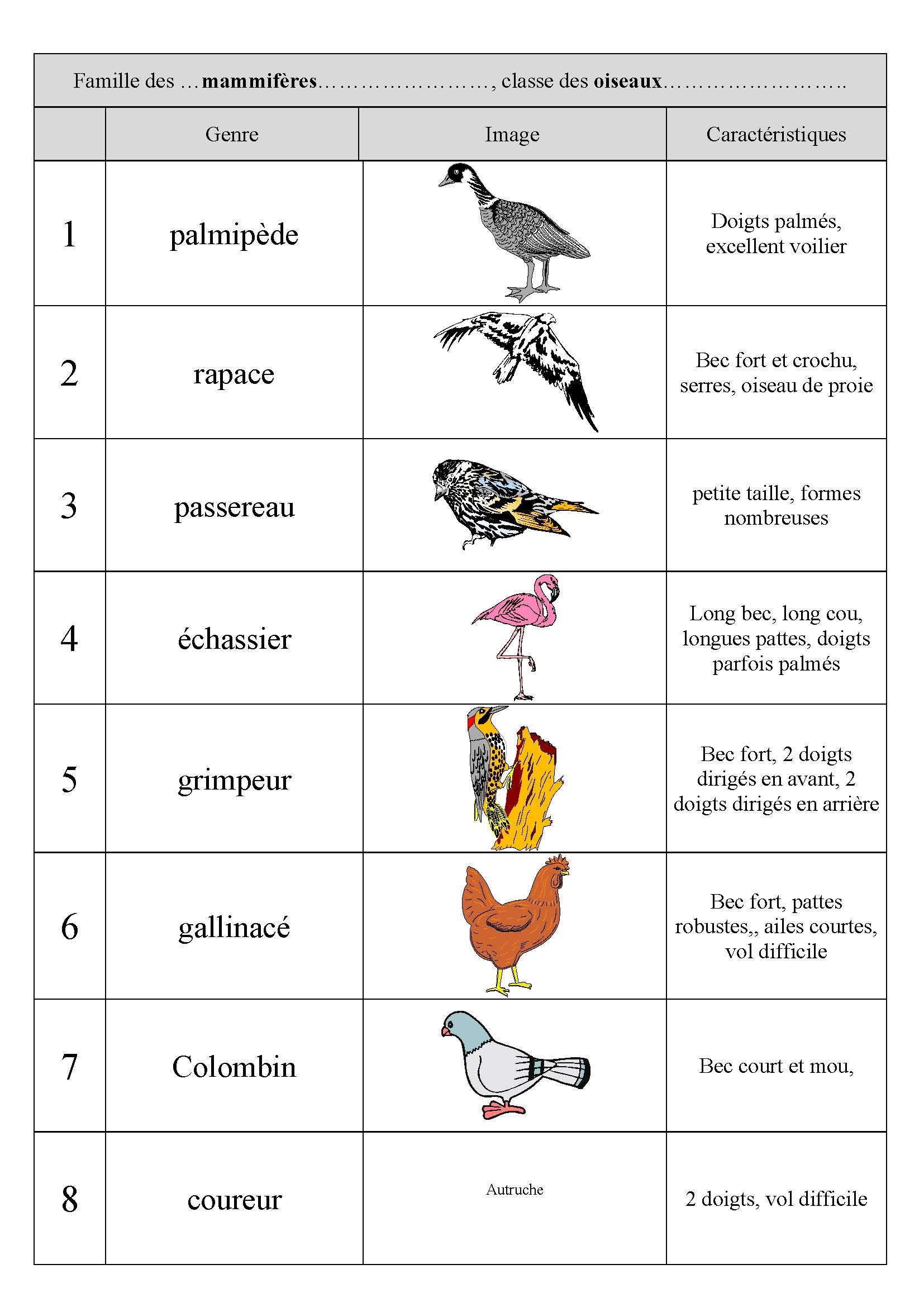 classement des oiseaux correction