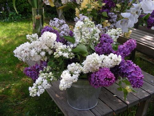 Langage des fleurs !!!