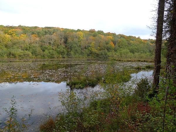 Les étangs des Marots en automne