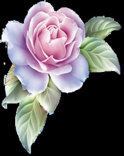 roses pour Elyci    essais 1