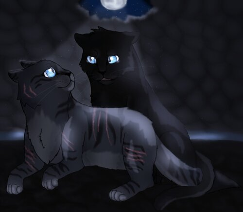 Plume de Jais et Jolie Plume (Crowfeather and Feathertail)