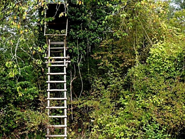Forêt lorraine 17 Marc de Metz 2011