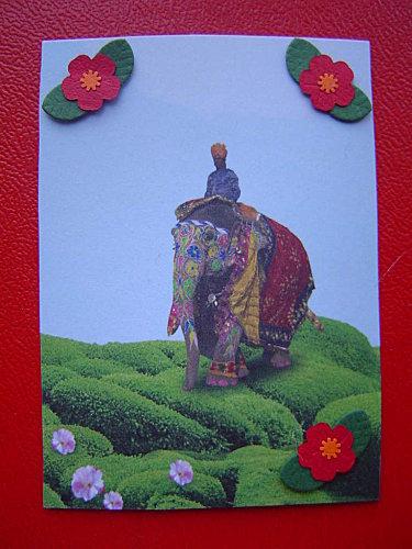 135-l-elephant-2.9-serie-zen.jpg