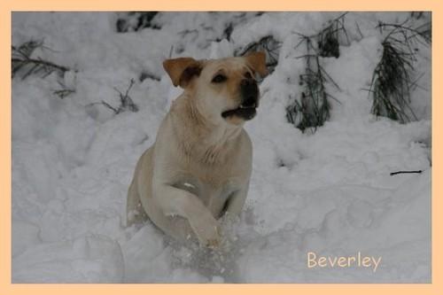 BeverleyBB2.jpg