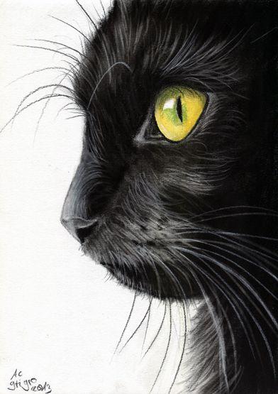 Portrait de chat noir