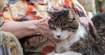 Un chat rejoint sa maîtresse en maison de retraite