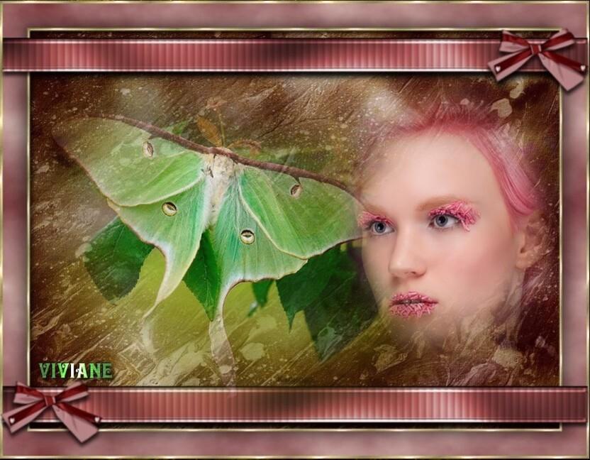 Caresse papillon