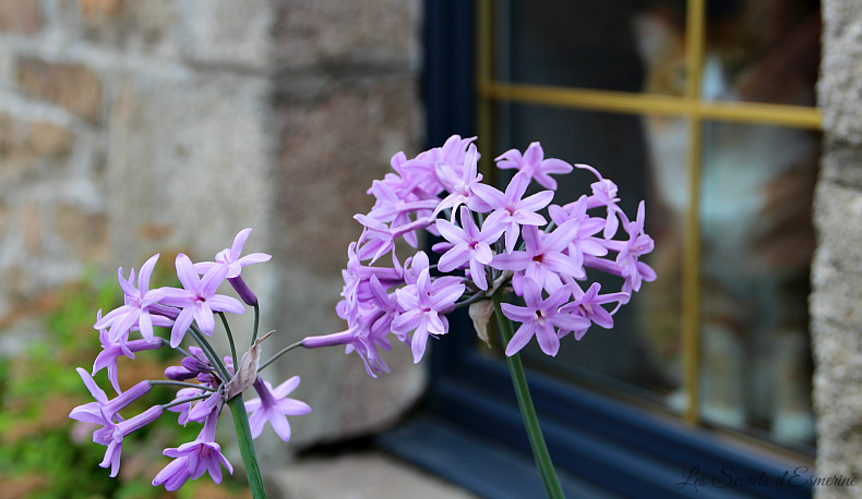 Notes florales [Défi du lundi] - agapanthe