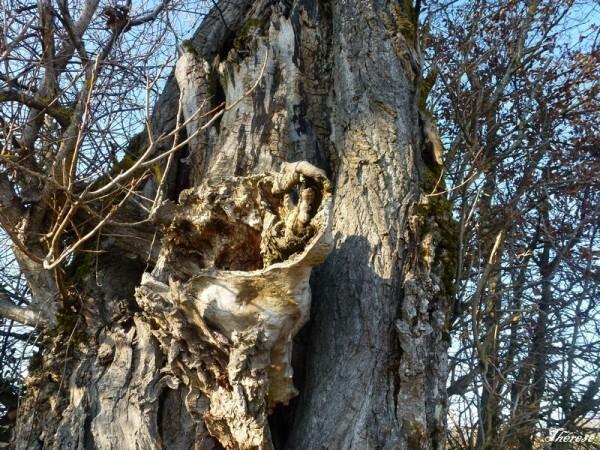 Troncs d'arbres (7)