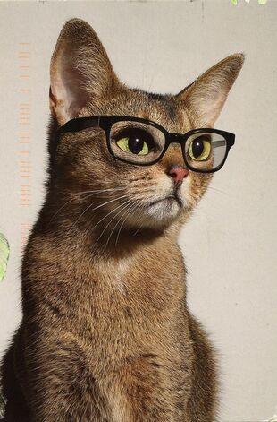 """Résultat de recherche d'images pour """"PArdon rigolo d'un chat"""""""