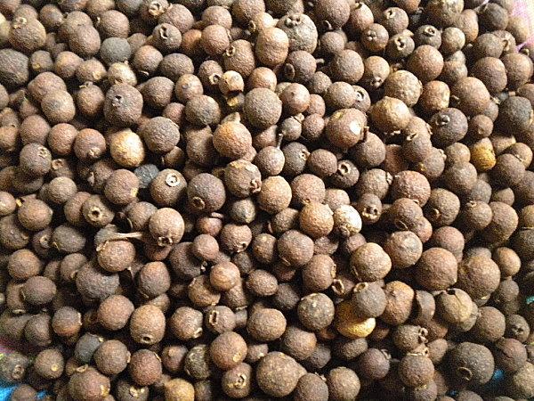 Feuilles graines de bois d'Inde 005