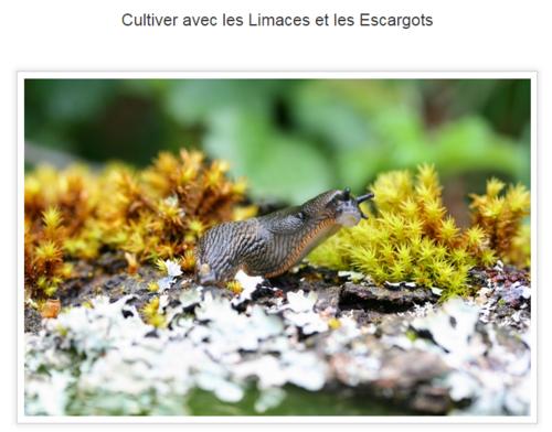 Cultiver avec les limaces et les escargots