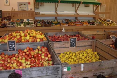 Journée cueillette des pommes