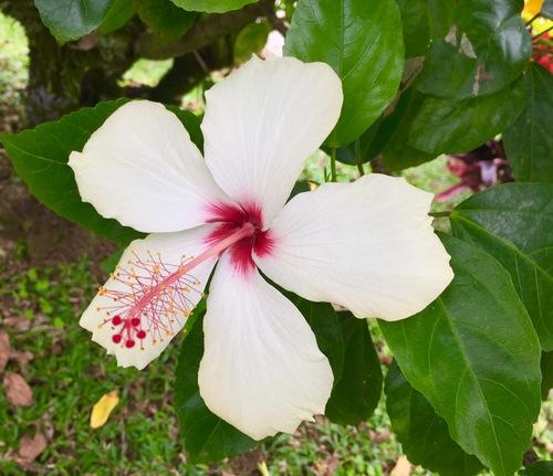 Costa Rica la flore