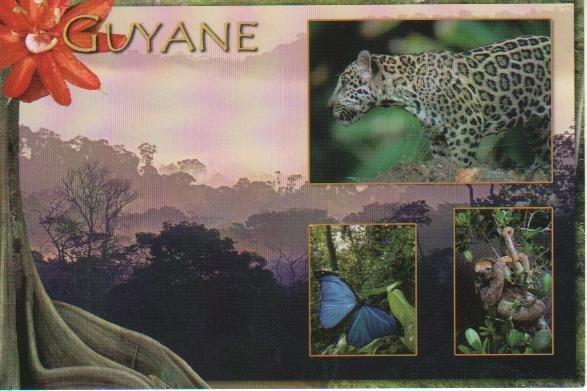 guyane3 001
