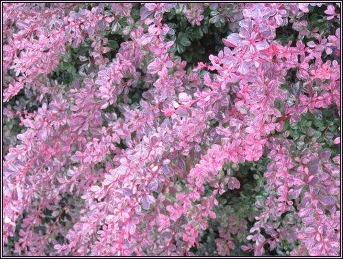 Des fleurs dignes d'une bijouterie...;)