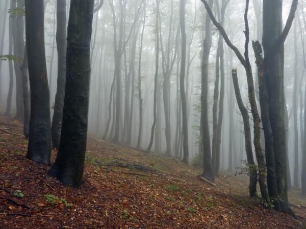 Jour 11 - Sommet de Stoletov - Brouillard dans la forêt