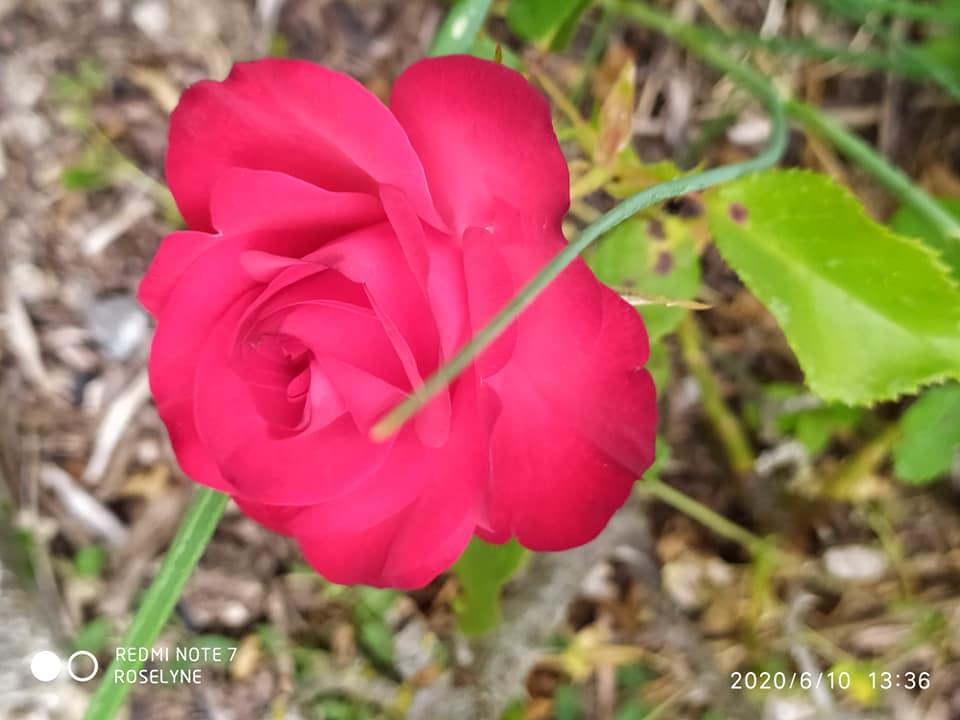 L'image contient peut-être: plante, fleur, nature, plein air et texte