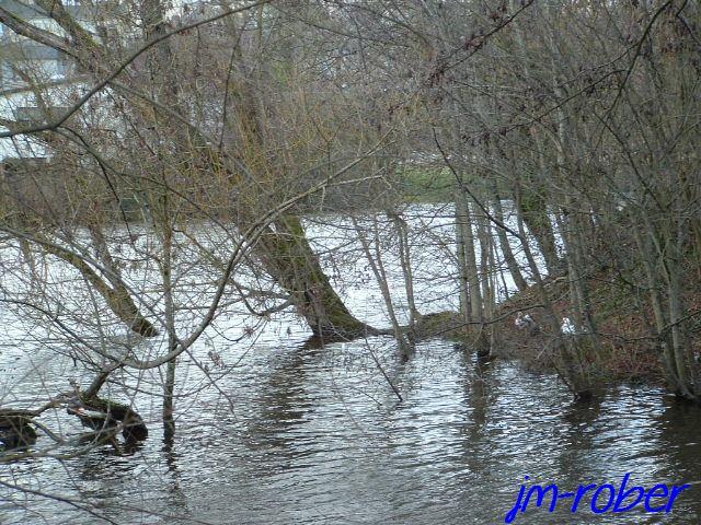 Limoges  Ses bords Vienne un refuge pour les canards à colvert