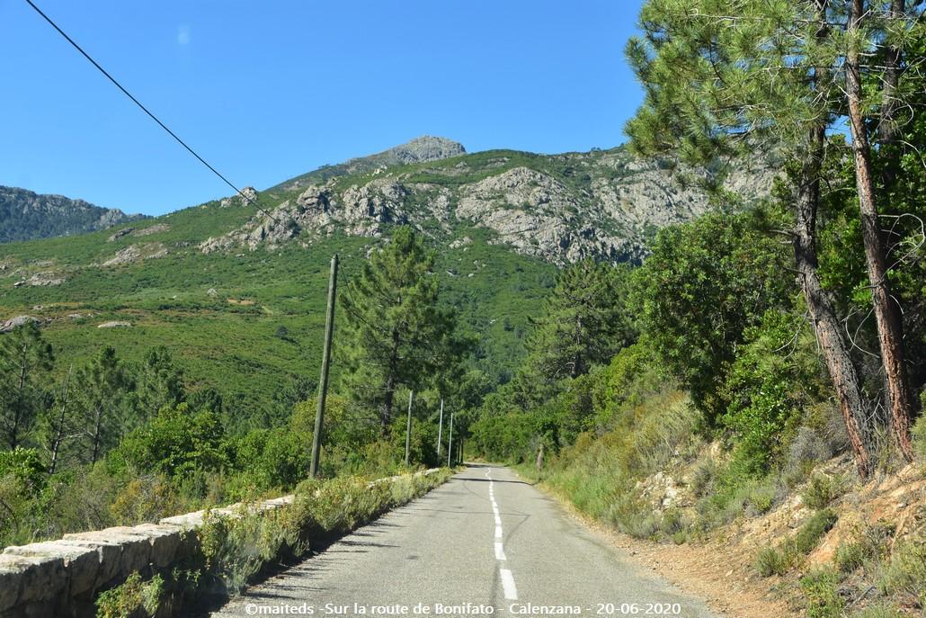 Sur la route de la forêt de Bonifatu - Corse