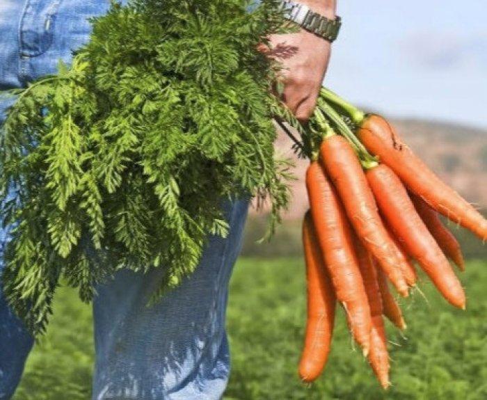 Как пить морковную ботву при геморрое