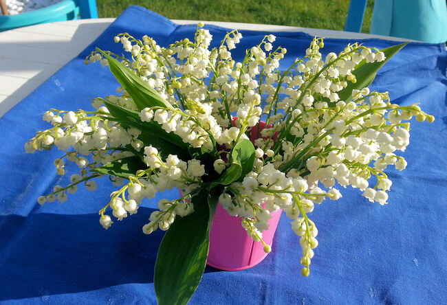 Printemps fleuri et précoce.