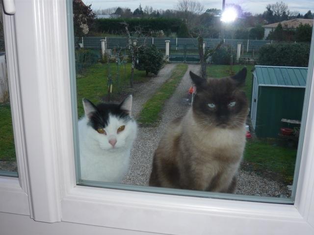 Odilon et les chats