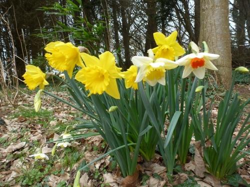 Le printemps: c'est parti!