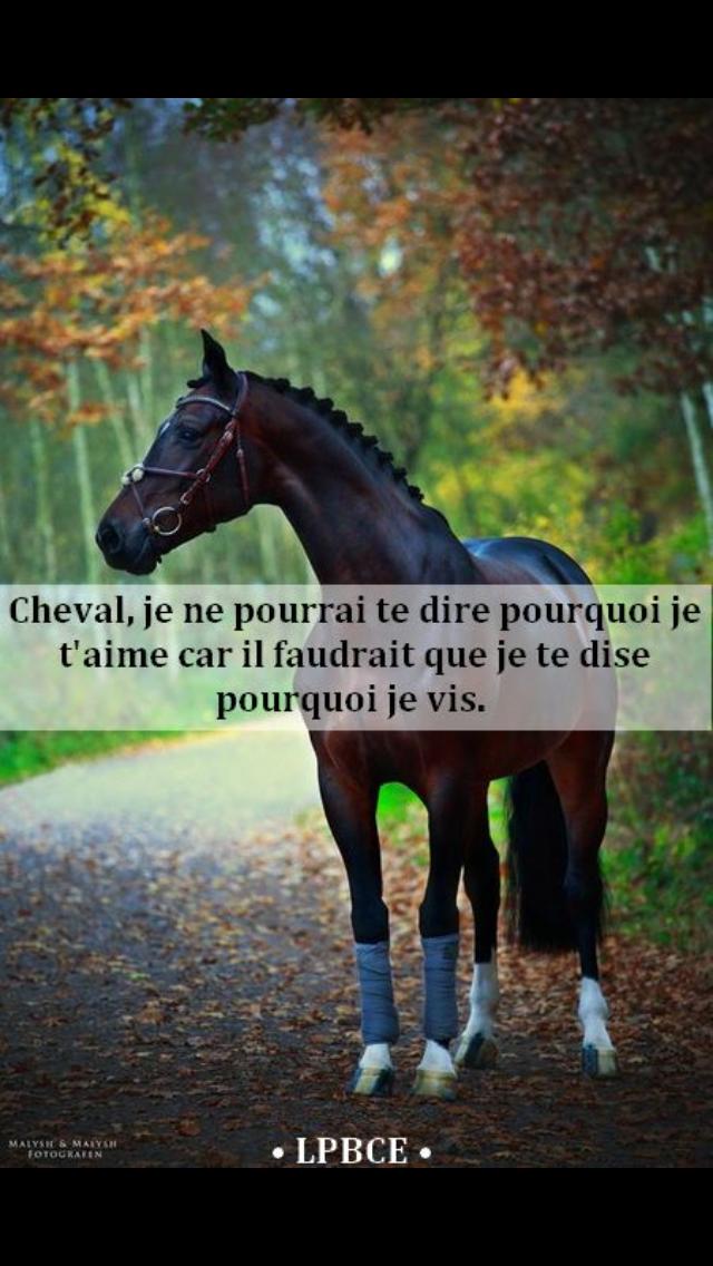 Épinglé par Léa sur HorSes   Citations équestres, Citation cheval, Cheval