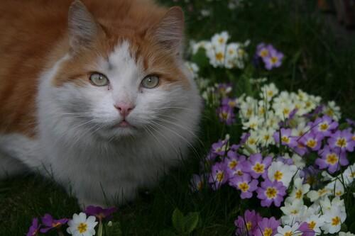 Hou ..hou ...le printemps ...