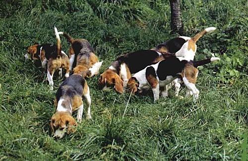 beagle2g.jpg