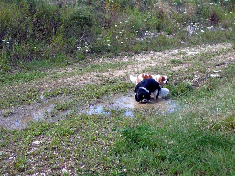 Le bain de boue