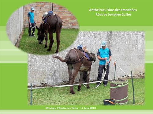 Anthelme, l'âne des tranchées