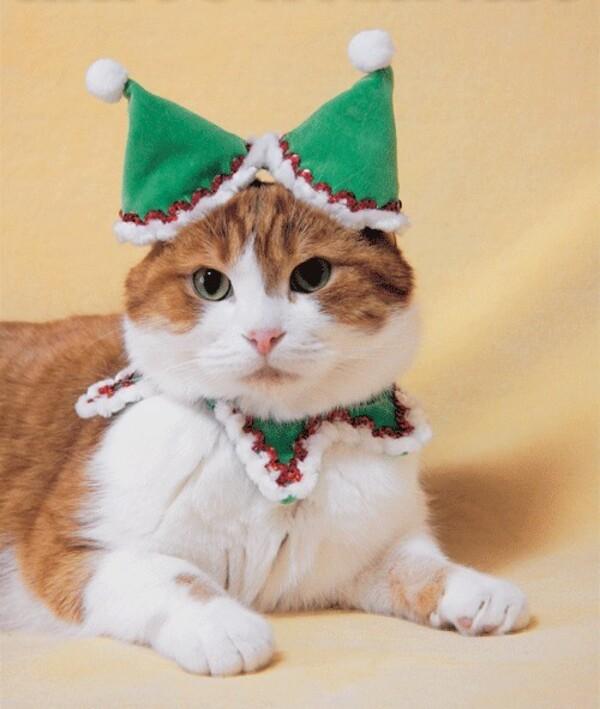 Noël au pays des chats