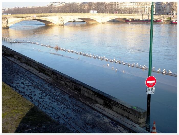 La Seine fait du yoyo.