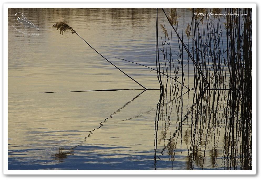 Reflets sur les étangs