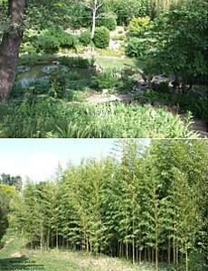 jardin zen 11
