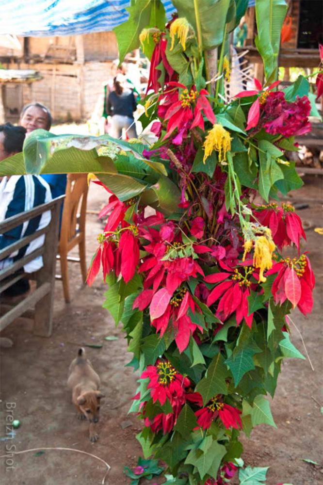 Le bananier décoré - Fête des fleurs chez les kamus de Ban Bompeang