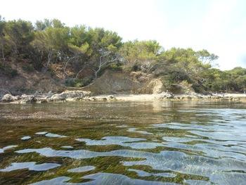 On rase les posidonies (au fond à droite, le début de la plage de la Baume, très occupée à cette heure)
