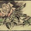 Esquisse d une rose