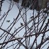 Oiseaux (3).jpg