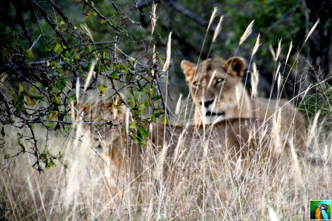 Afrique du Sud : juin 2018 suite du safari 2/3