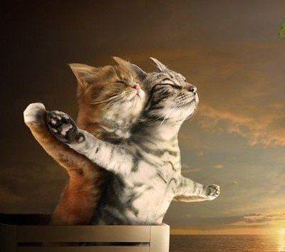 Titanic version chat trop trop mignon!si trouve sa trop mimi abonne toi! Lilou-miss